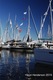 _20Sailboat_20Show_202015.png