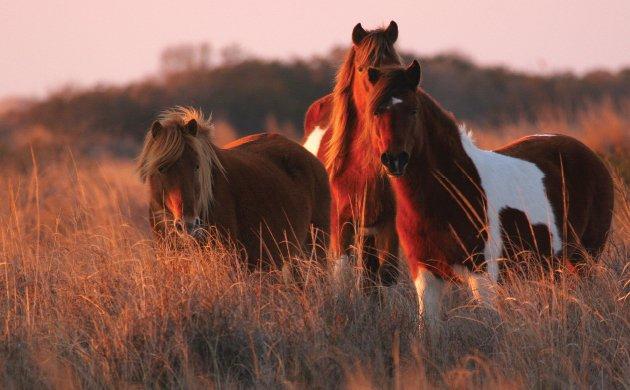 horses-main.jpe