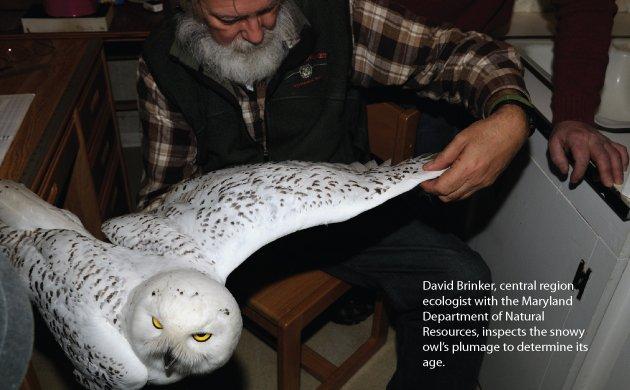 owl2.jpe