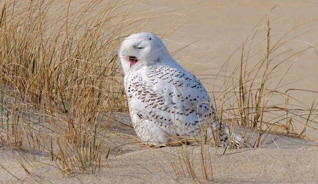 owl5.jpe