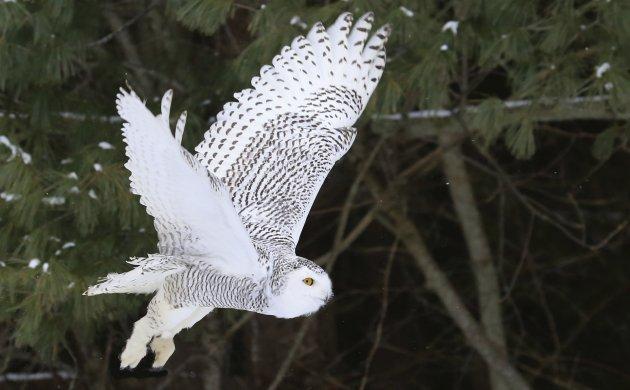 owl-main.jpe