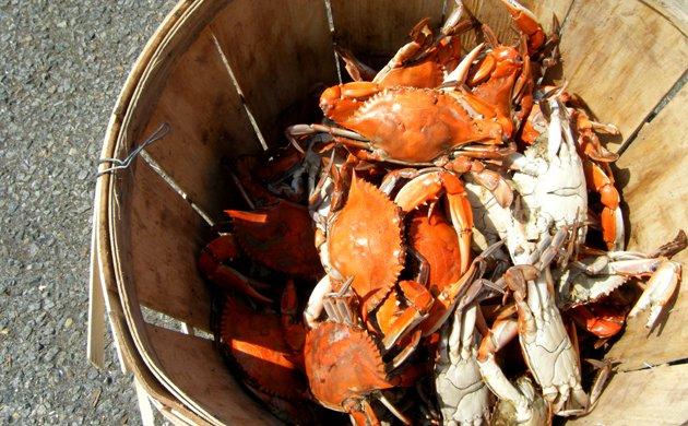 crab.jpe