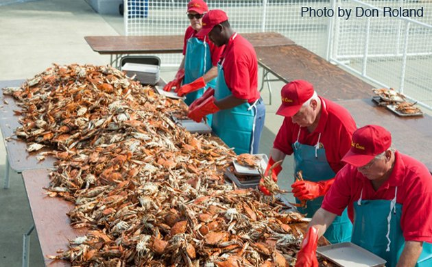 crab1-main.jpe