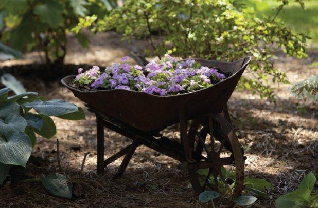 garden6.png