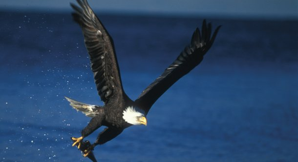 eaglecatch.jpe