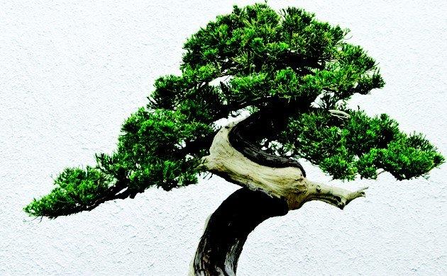 tree-main.jpe