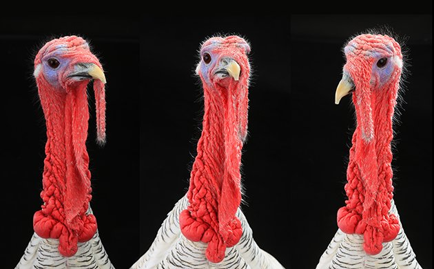 turkey.jpe