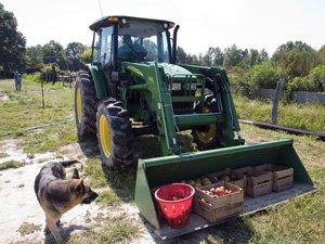 tractor_300.jpe