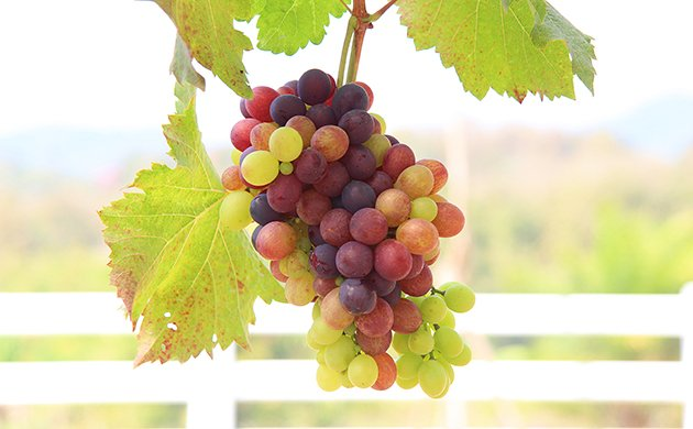 wine-main.jpe