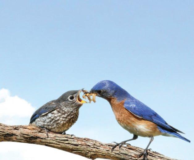 birds_20bees.jpe