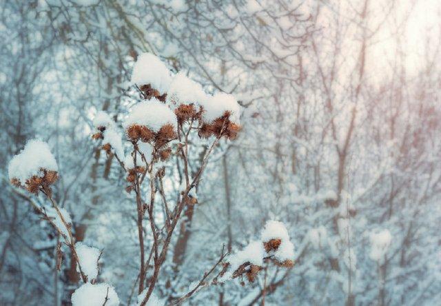 winter gardens.jpg