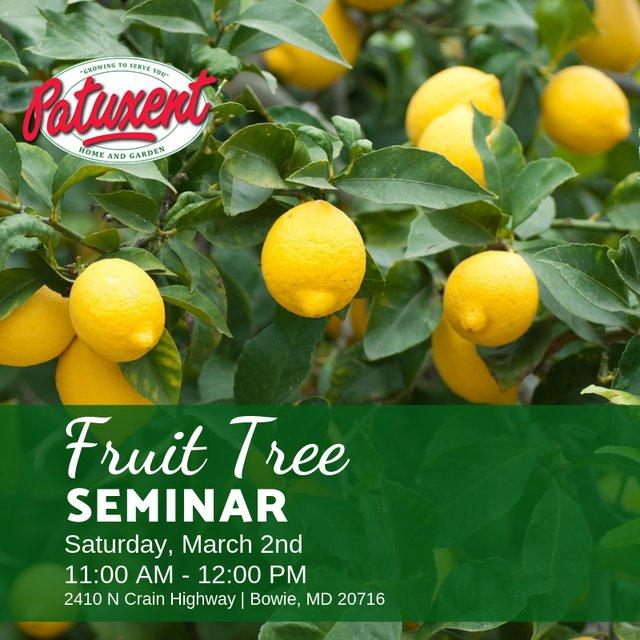 FruitTree_Seminar.png