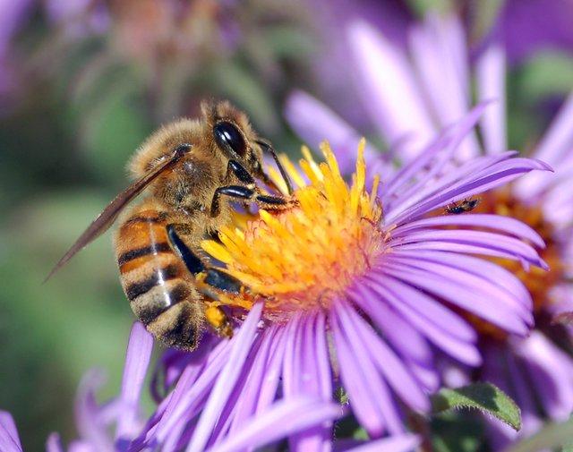 hives alive honey bee.jpg