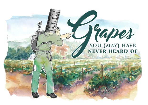 grapes you never heard of.png