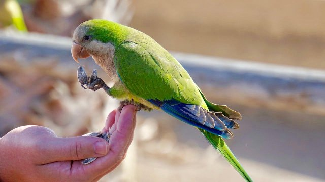 Bird Grooming Gala.jpg