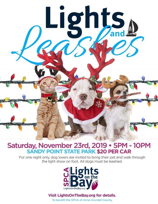 LIGHTSLEASHES2019-OPT2-1.jpg