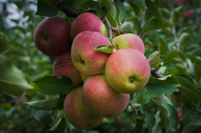 Pick Your Own Fruit.jpg