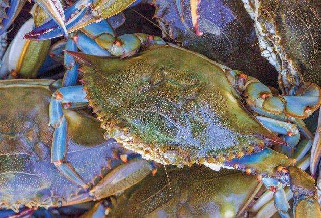 crab4.jpe