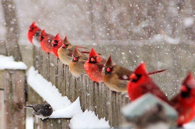 wild birds.jpg