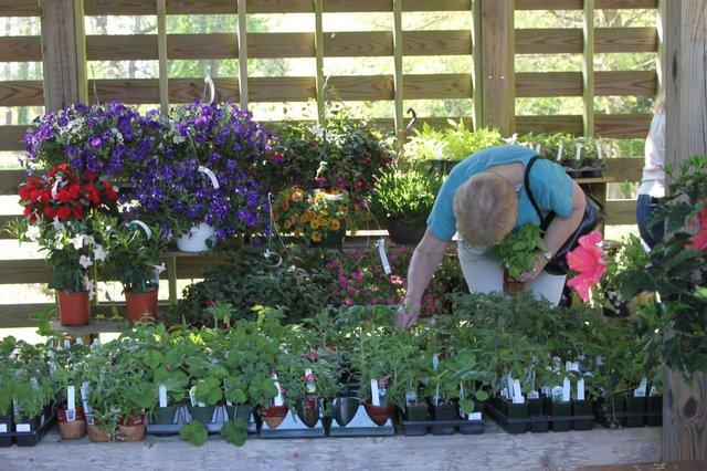 Plant Sale- Small (1).jpg