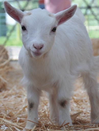 L0220_0001s_0014_goat 2.jpg