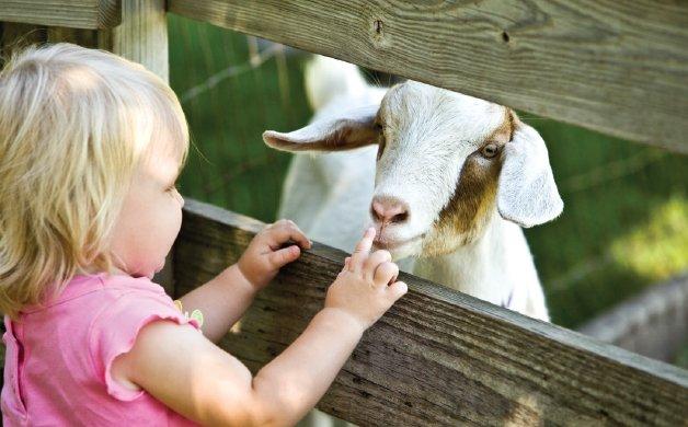 C0220_0001s_0028_goat 3.jpg