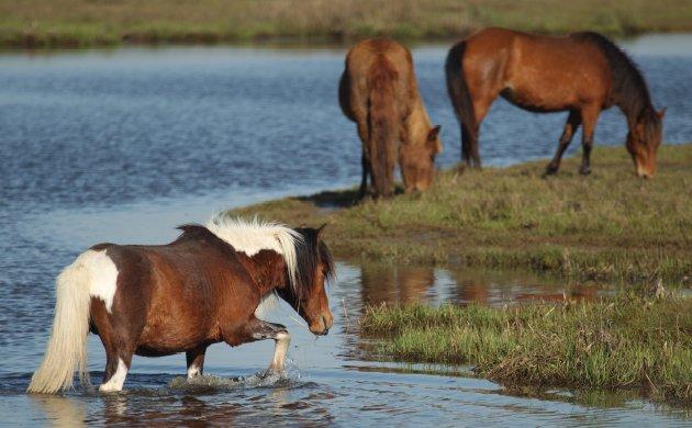 horse1.jpe