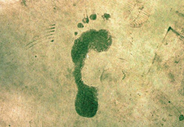B0420_0001s_0011_carbon footprint.jpg