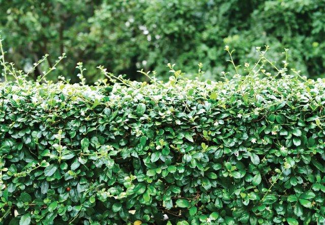 B0620_0000s_0009_min garden.jpg