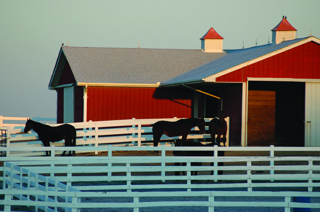 horse_barn_bernadette_copy.jpg