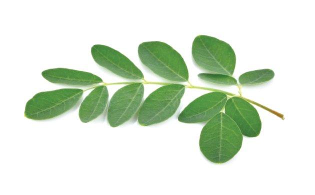leafy-greens4.jpe