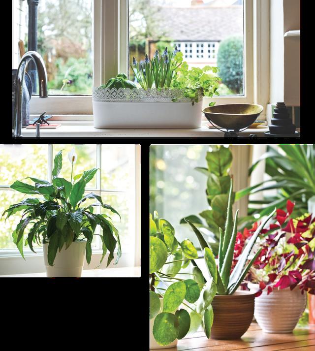 home-garden2.png