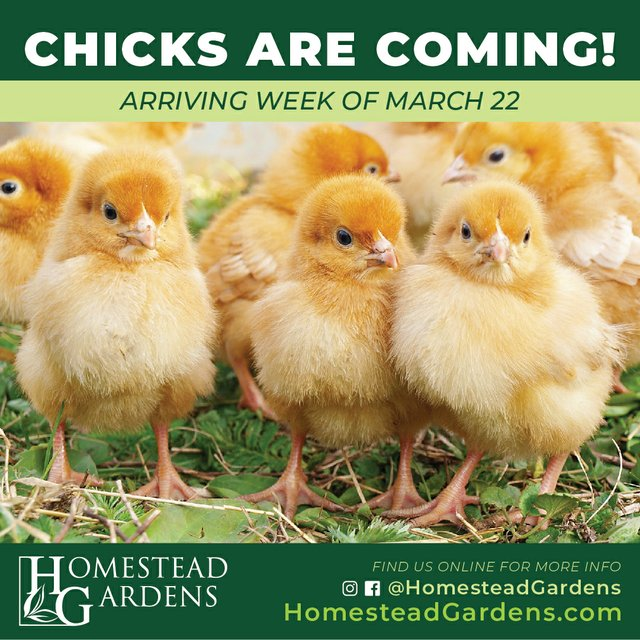 Chicks Week of March 22.jpg