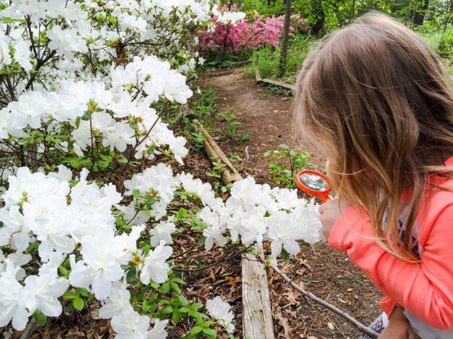 Learning at LT - Garden Grow.jpg
