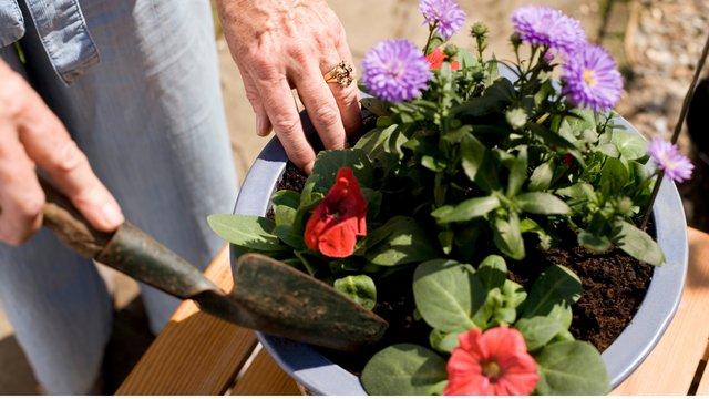 Gardening and Healing.png