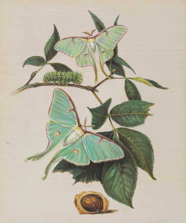 Botanical-Program-Pic-1277x1536.jpg