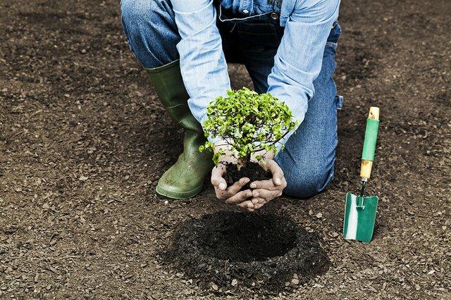 Greening.jpg