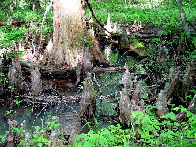 Battle Creek-062.jpg