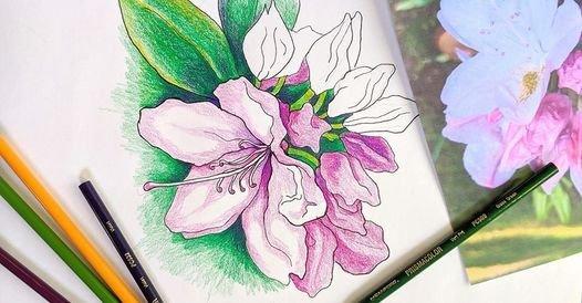 botanicaldrawing.jpg