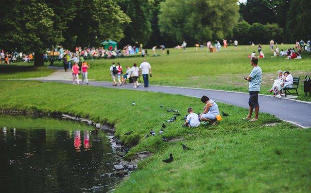 nature-bird-people-grass.jpe