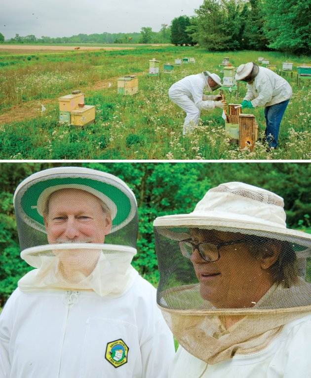bees2.jpe