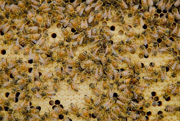 bees7.jpe