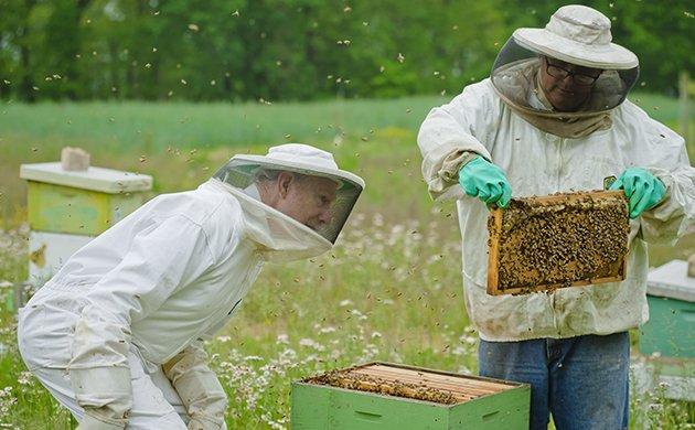 bees-main.jpe